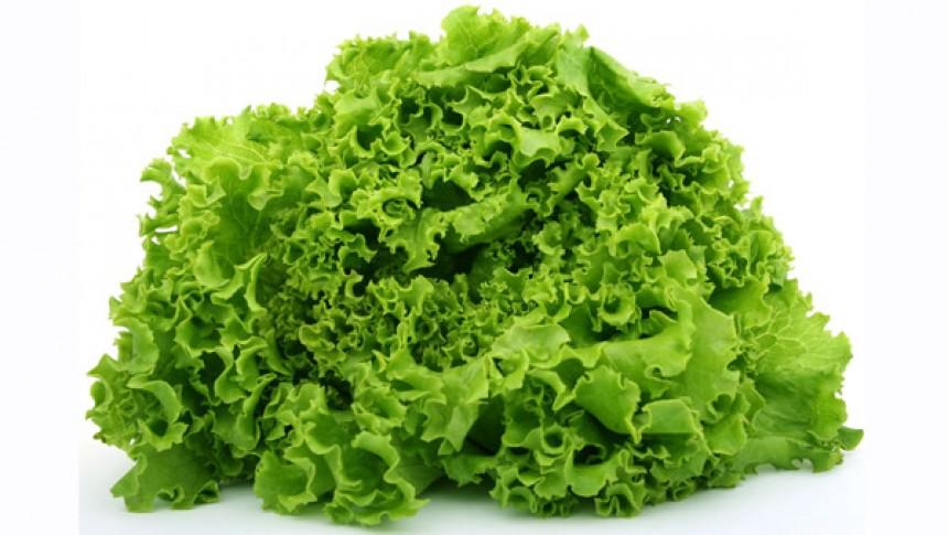 Лучшие сорта и виды листового салата